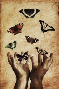 butterfliesTransformation